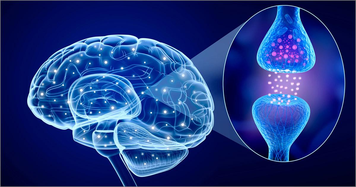 Le 4 neurotransmetteurs de la joie et comment les hacker