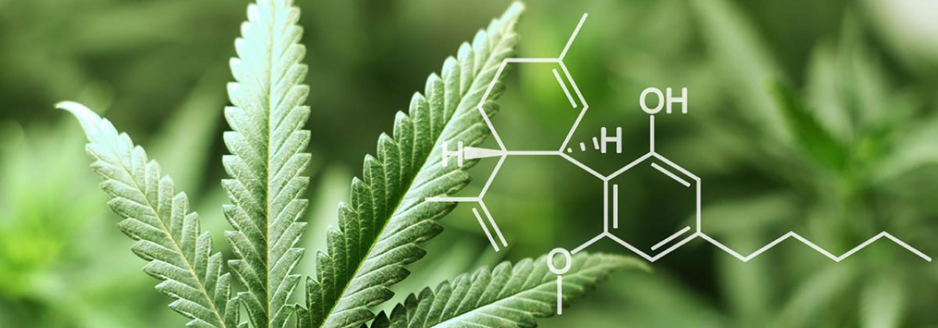 Le CBD cannabidiol le début du cannabis légal ?