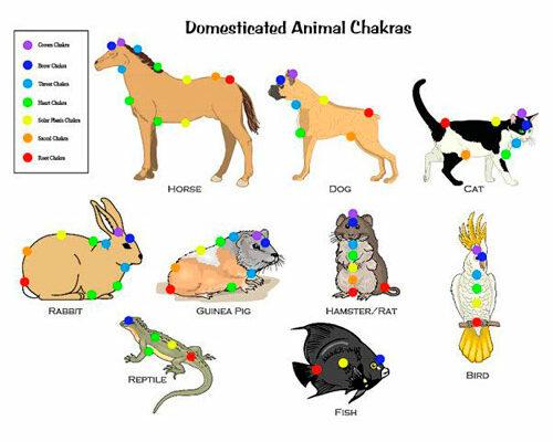 chakras-animaux