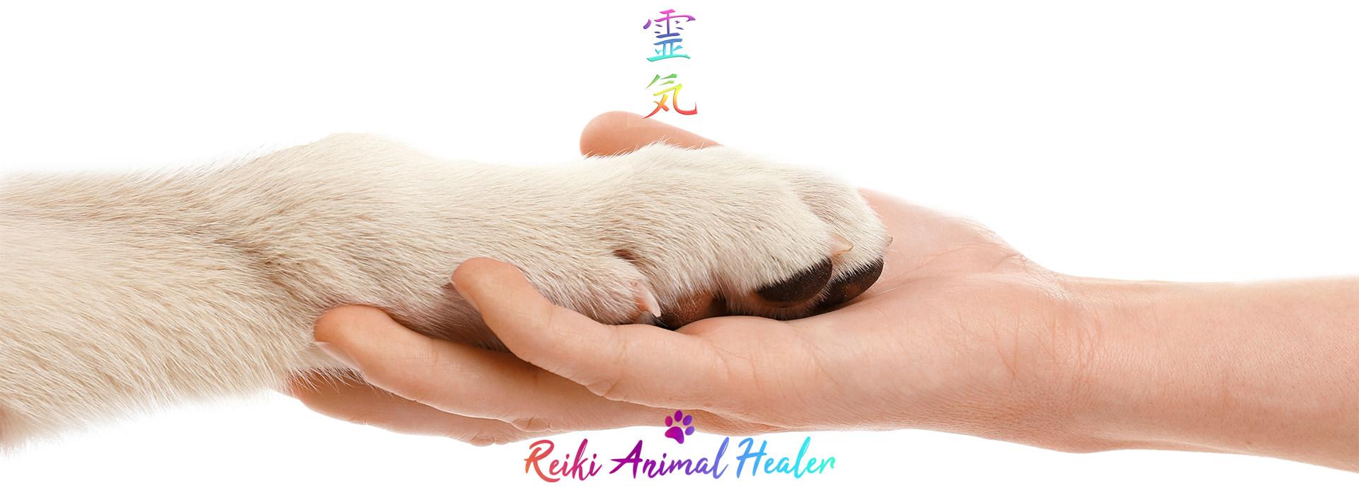 Le Reiki sur les animaux